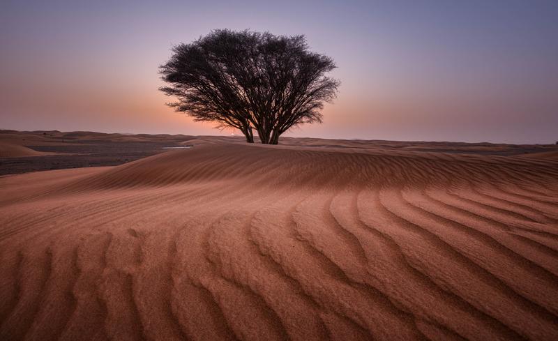 沙漠中的樹